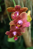 Colourfull orchid — Stock Photo