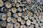 Woodpile of firewood — Stock Photo
