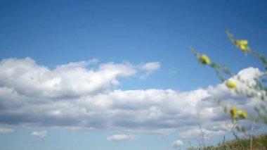 Na polu bloomy timelapse — Wideo stockowe