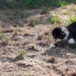Stock Video: Cat playing with hunted locust