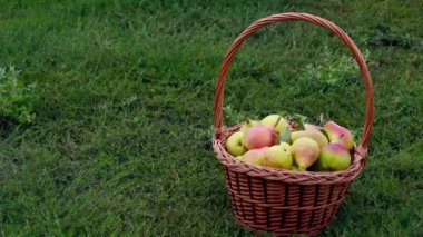 Organic apples and pears in a basket outdoor — Stock Video