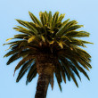 Stock Photo: Green palm tree on blue sky background