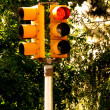 Stop light with trees — Stock Photo