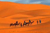Camel caravan — Stock Photo