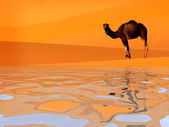 Camel and water — Stock Photo