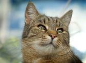 Кошачий взгляд вверх — Стоковое фото