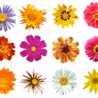 Stock Photo: Various flowers Isolated
