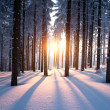 Sunset in the wood in winter — Stock Photo #22771532