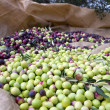 Many just picked olives — Stock Photo #16343757