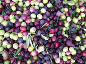 Olives close up — Stock Photo