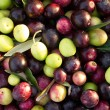 Olives background — Stock Photo
