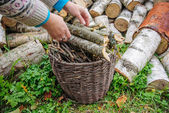 The girl stacks logs in a basket — Stock Photo