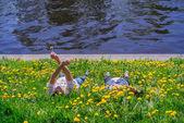 Kärleksfulla paret liggande på flodbank. — Stockfoto
