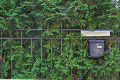 Mailbox on natural green background — Stock Photo