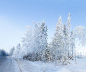 Russian Winter forest snow road — Stock Photo