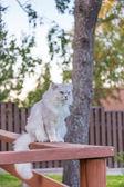 Katt utomhus — Stockfoto