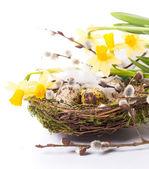 пасхальные яйца в гнезде с нарцисс — Стоковое фото