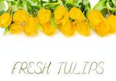 Желтый тюльпан цветы — Стоковое фото