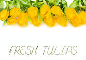 Yellow tulip flowers — Stock Photo