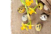 Oeufs de Pâques avec Narcisse — Photo