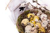 巢与水仙的复活节彩蛋 — 图库照片