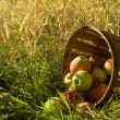 Basket of fresh picked apples — Stock Photo