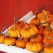 Fall gourds — Stock Photo #33176801