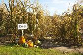 Corn maze — Stock Photo