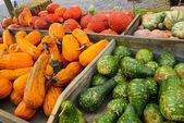 Gourds — Stock Photo