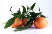 Three tangerines with leaves — Stock fotografie