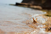 Starfish on pebbles in the wave — Stock Photo