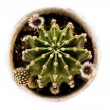 Cactus from above — Stock Photo #23540565
