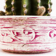 Decorated jar with cactus — Stock Photo