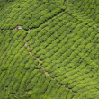 Tea Plantation, Cameron Highland — Stock Photo