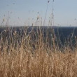 Stock Video: Reeds, Sea, Aegean