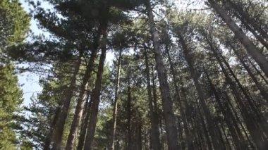 Ida Mountain, Kaz dagları — Stock Video