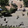 Pigeons, Edirne — Stock Video #13593061
