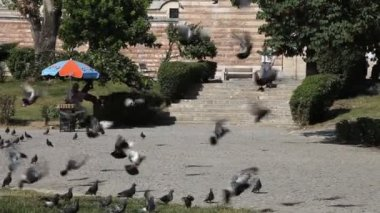Pigeons, Edirne — Stock Video
