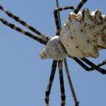 Spider — Stock Photo #13811339