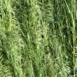 Grass — Stock Photo #13811716