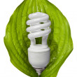 Eco friendly fluorescent bulb — Stock Photo