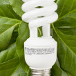 Florescent bulb in green leaves — Stock Photo #13389634