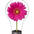 Light bulb with pink flower inside — Stock Photo #13399934