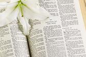Heilige bijbel en witte bloem — Stockfoto