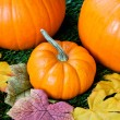 View of halloween pumpkins — Stock Photo