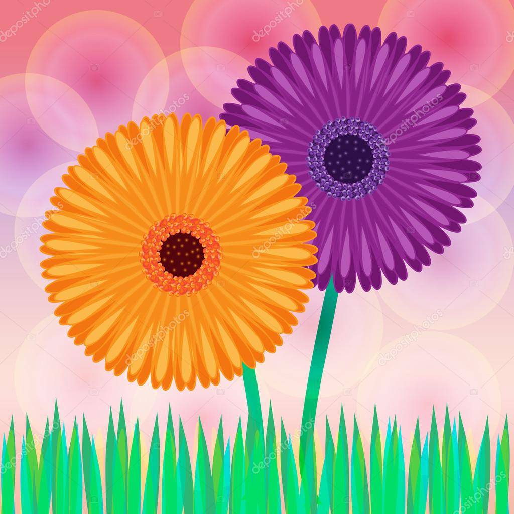 Vector illustration of daisy flowers  — Stock Photo #13525837