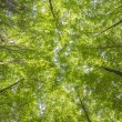 Canopy trees with sunbeams — Stock Photo