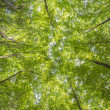 Stock Photo: Canopy trees with sunbeams