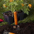 Backyard planting tools - Stok fotoraf