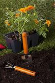 Backyard planting tools — Stok fotoğraf